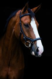 Bridon de compétition Horseware Rambo Micklem Deluxe