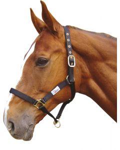 Harry's Horse Licol controller