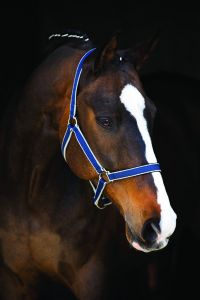 Licol Horseware Amigo