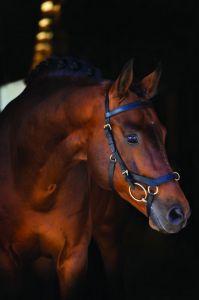 Multibridon Horseware Rambo Micklem cuir